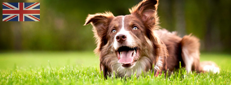Dog Practitioner Courses