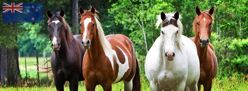 Horse Courses