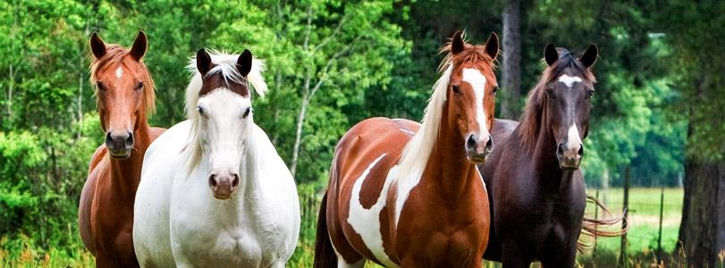 Emmett Horse Practitioner L1 (EP1)